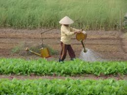 USAID Supports Vietnamese Farmers to Understand Land Rights